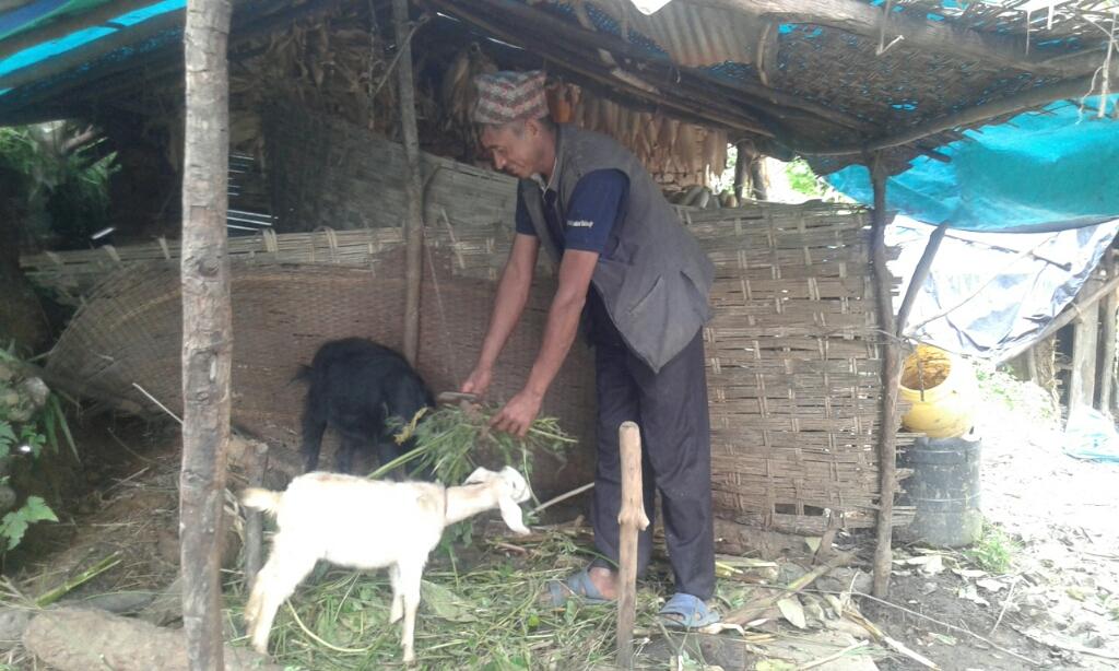 Provision of Livestock