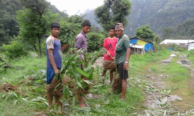 Fodder Cultivation