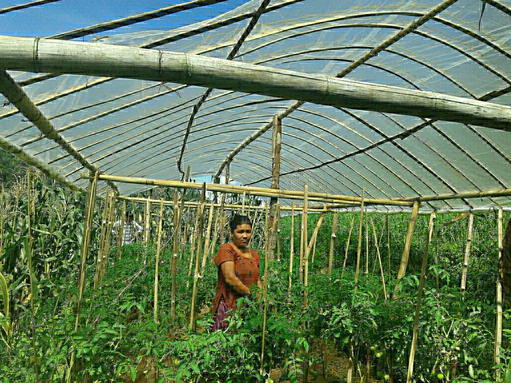 Off farm vegetables cultivation of plastic tunnel